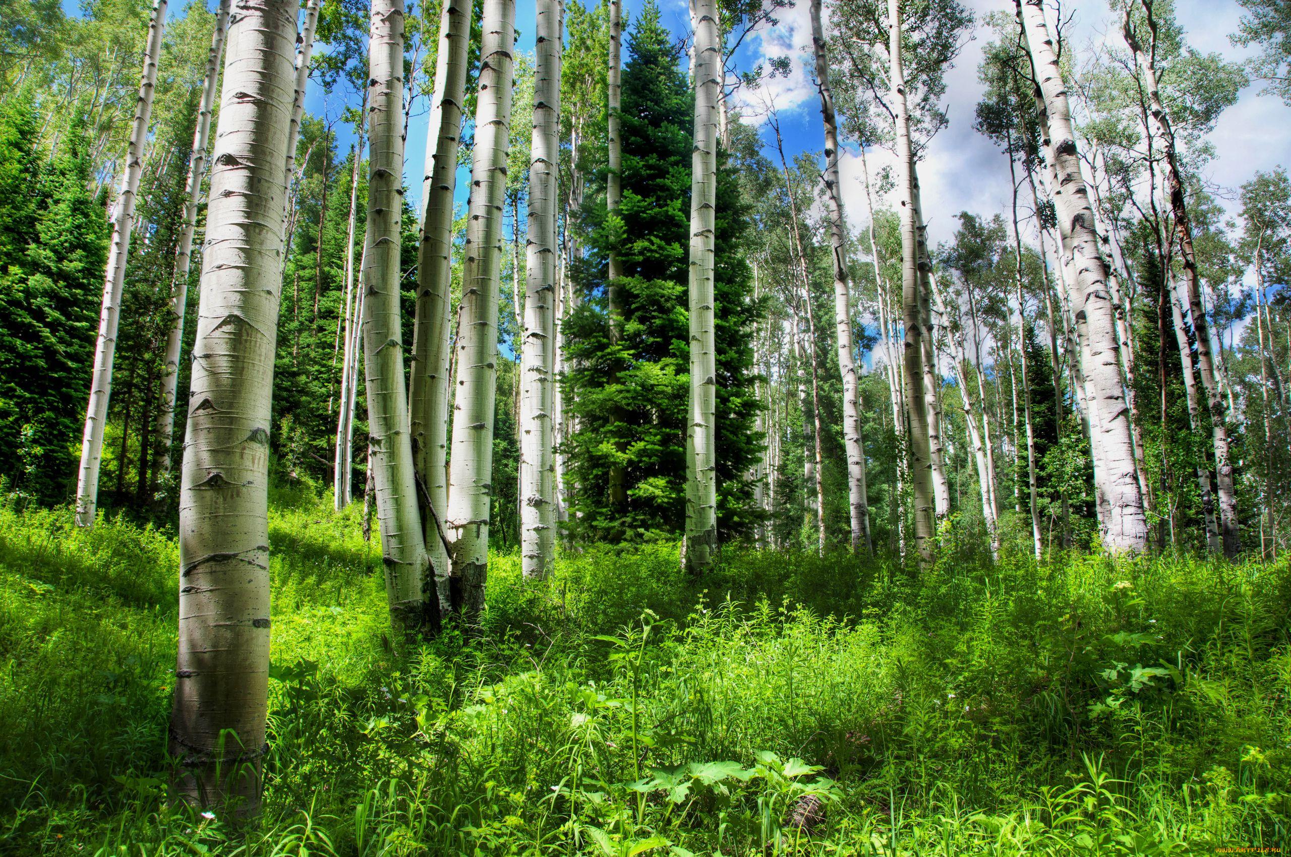 все красивые картинки русского леса центральной части